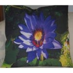 water lilly blue