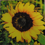 Sunflower 2 Wood Art
