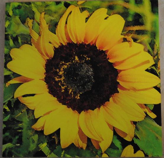 Sunflower 2 Wood Art